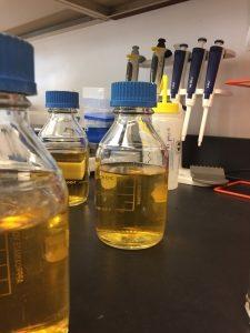 Bacteria Culture Bottles